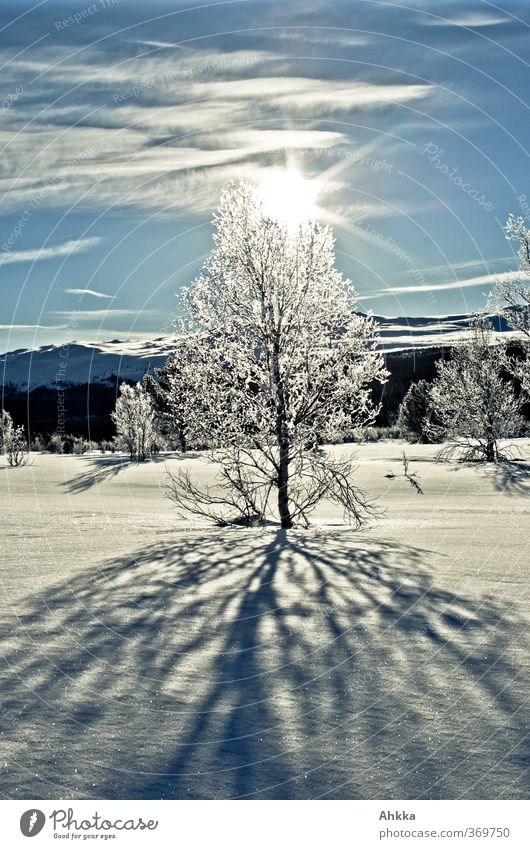Snow-covered tree in backlight, winter landscape Norway Nature Landscape Animal Sun Sunlight Winter Weather Beautiful weather Tree Mountain Fjeld Fantastic