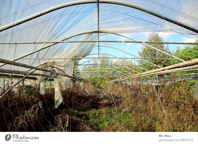 Architecture and nature I airy Nature Plant Greenhouse Decline Derelict Roof tarpaulin Packing film Metal Shriveled Broken Transience Ruin Destruction Gardening
