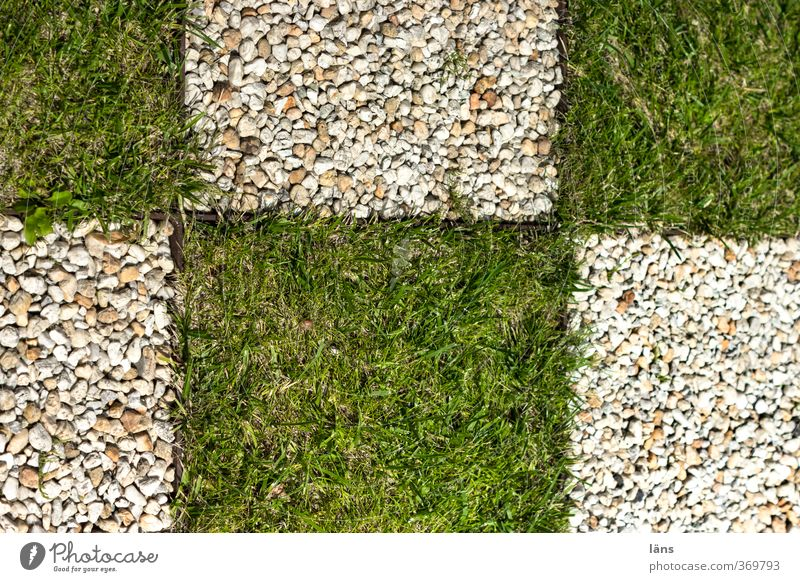 portrait Leisure and hobbies Nature Grass Garden Stone Green Conscientiously Endurance Orderliness Cleanliness Effort Stress Resolve Accuracy Passion Lawn