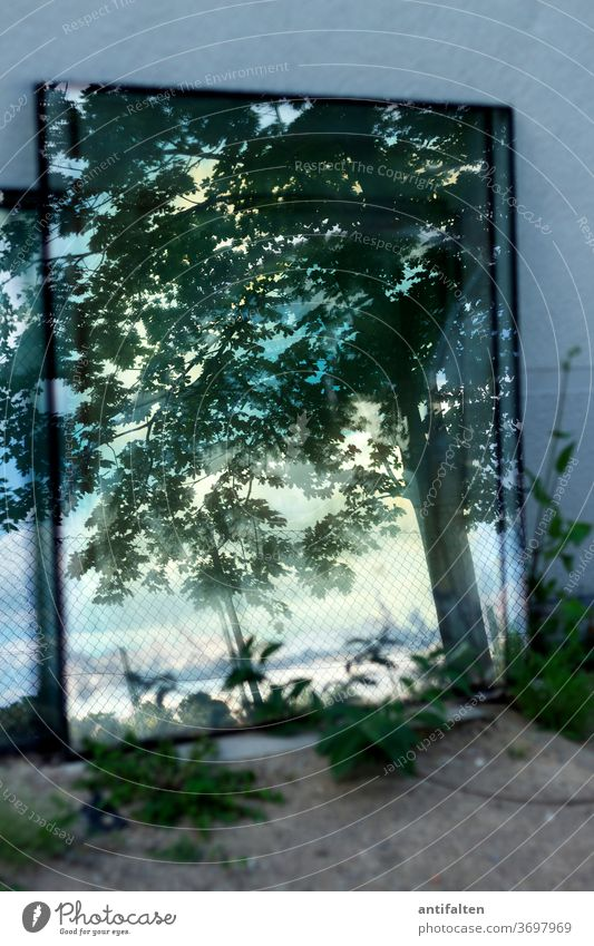 another world Mirror Nature tree Wall (building) Reflection green flaked Branch Plant Exterior shot Colour photo Day Blue Forest Slice Window panes