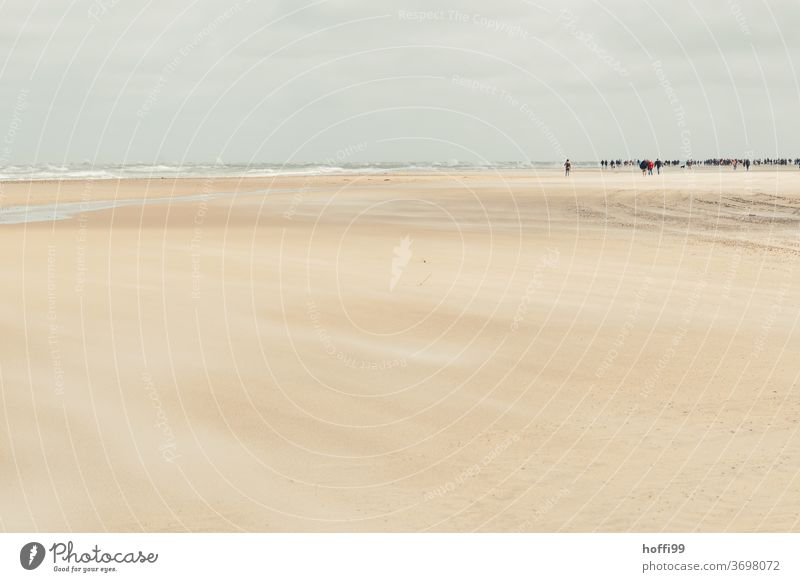 bustle in the distance on the wide beach of Skagen Beach Ocean Coast Summer Landscape Wet Water Vacation & Travel Relaxation ebb and flow Sunlight Silhouette