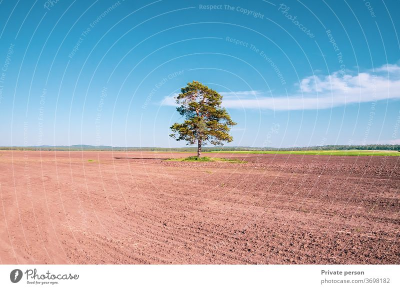 lonely tree in a field on blue sky horizon nature meadow summer landscape oak environment spring season weather ground sun clear countryside agriculture stage
