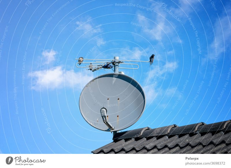Birds on a satellite dish on a rooftop internet wireless equipment digital communication parabolic building home technology network house receiver signal radio