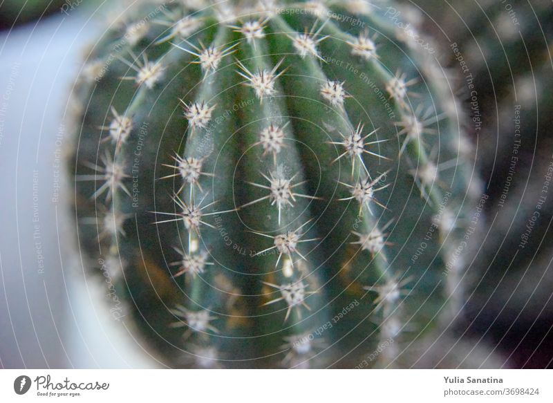 selective focus at the surface of the cactus nature plant green background flower growth closeup summer natural beautiful flora agriculture garden fresh macro