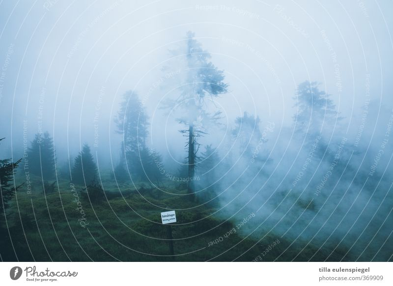 sherwood Environment Nature Landscape Clouds Bad weather Fog Forest Dark Creepy Cold Natural Blue Signs and labeling Tree Coniferous forest Coniferous trees