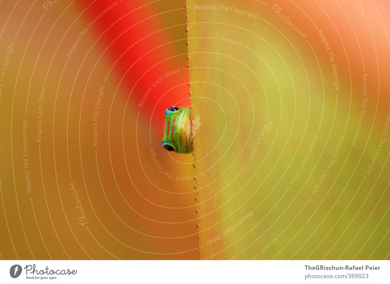 Nature Green Red Animal Leaf Yellow Eyes Funny Head Orange Nose Living thing Curiosity Hide Brash Progress