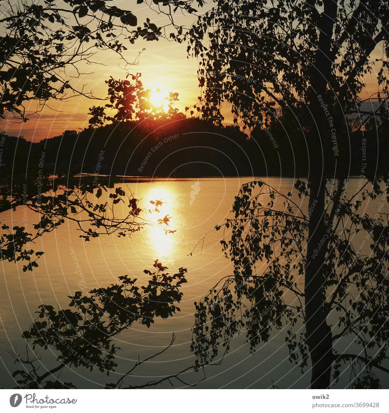 Sun behind the branch Environment Sunset Landscape Lake Light tree Deserted Exterior shot Colour photo Contrast Nature Idyll Copy Space bottom Beautiful weather