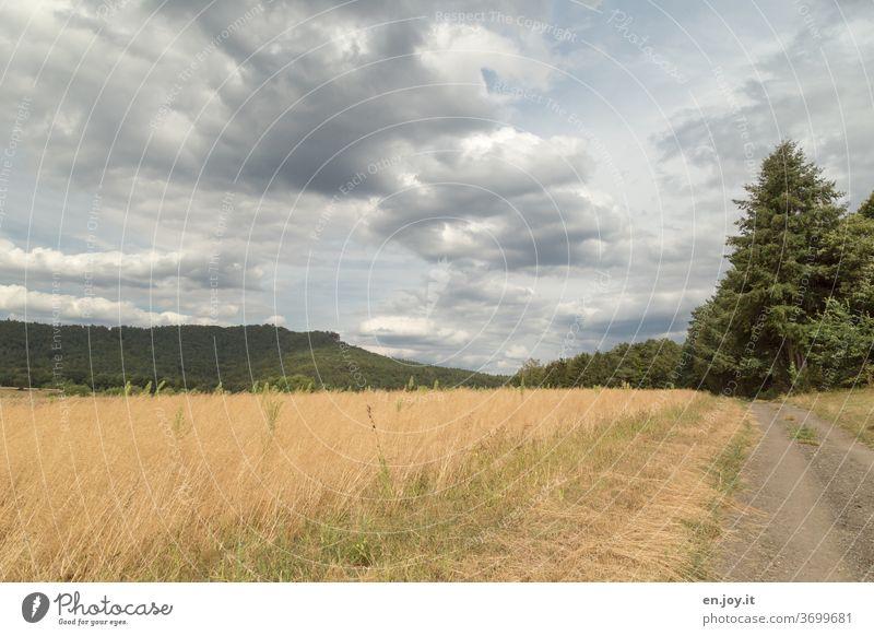 dirt road off the beaten track Gravel road Field tree hillock palatinate Rhineland-Palatinate Promenade Landscapes Sky Clouds Wide angle Horizon Idyll Deserted