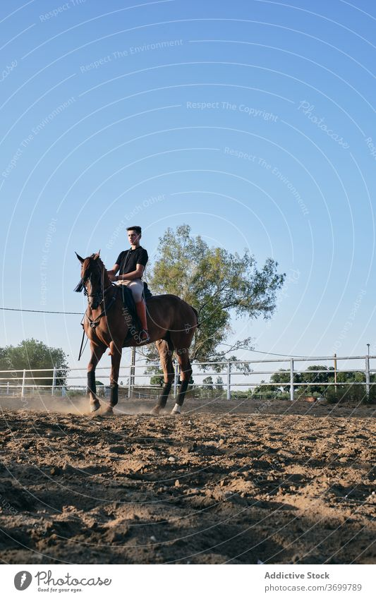Male rider on chestnut horse dressage equestrian horseback man paddock arena horseman male jockey sand ranch summer animal rural sit countryside mammal young