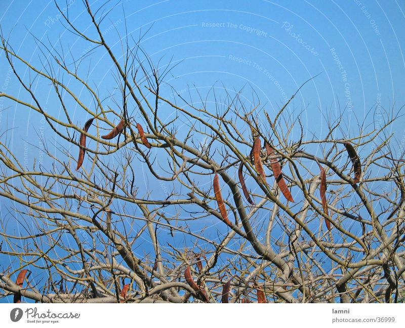 Tree Branch Twig Muddled Branchage Plantlet