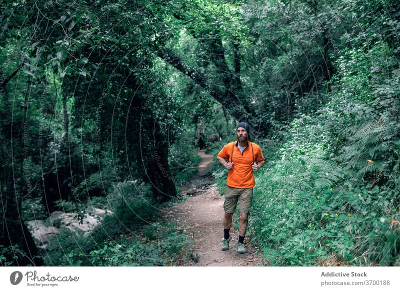 Male tourist walking in green forest woods summer vacation man travel hiker trail holiday tourism male trip tree traveler enjoy nature adventure journey