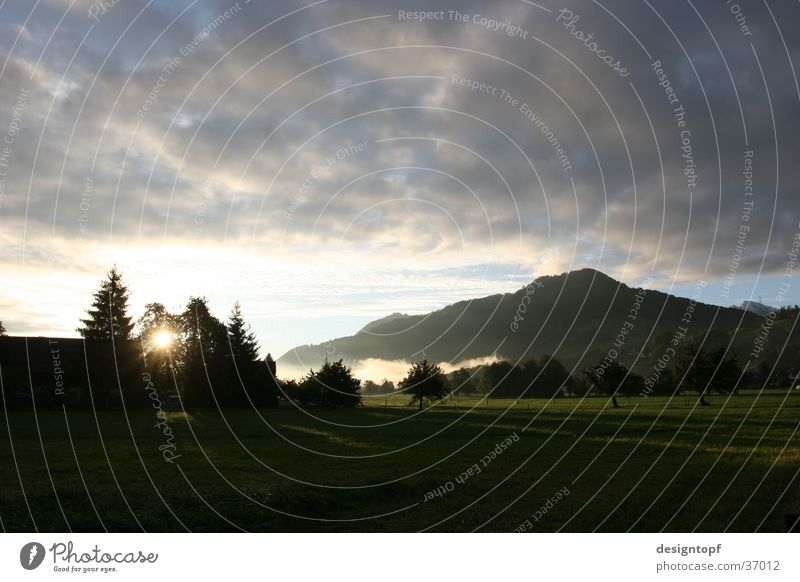 Tree Sun Clouds Landscape Peace