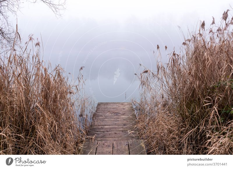 The footbridge at the lake in fog Lake Fog Footbridge reed bank Nature wood Autumn Winter Autumnal Water reflection Landscape tranquillity Loneliness off Vista