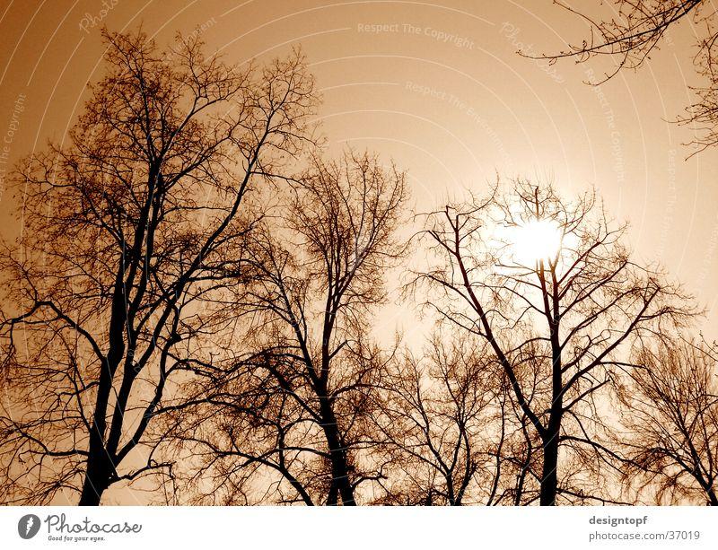 Tree Sun Yellow Colour tone Aare