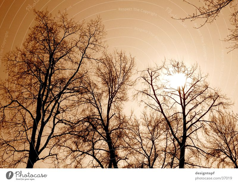 trees Tree Aare Colour tone Yellow Sun aarau island
