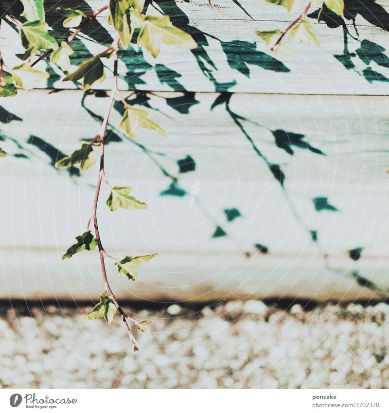 much light - much shadow | contrasts Light Shadow Sunlight Ivy Retro style vintage Summer Colour photo wood Analog Retro Colours Glistening