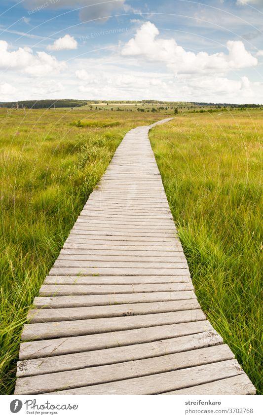 Wooden footbridge through the High Fagnes through green grass under a blue sky Bog Fen High venn Belgium Nature reserve wooden path Wooden bridges