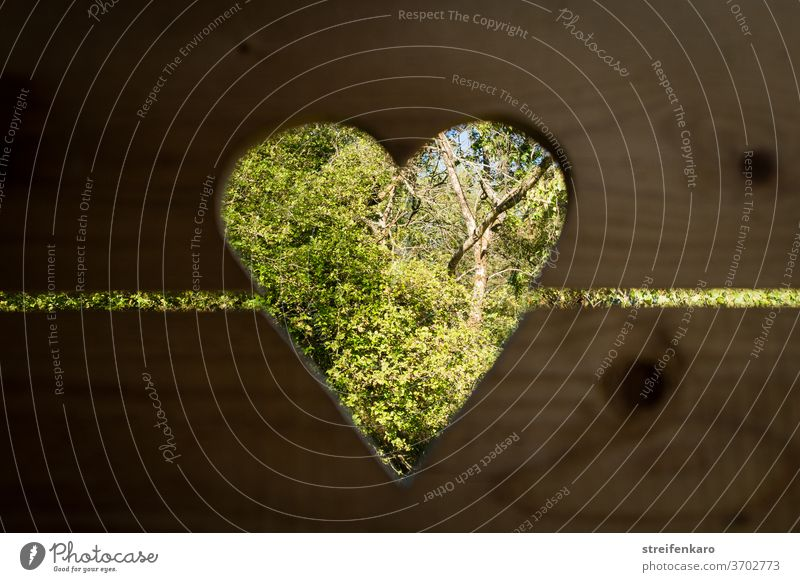 Easier view into the greenery through the heart-shaped opening in the door of the old outhouse Heart Latrine Toilet wood Day hut Colour photo Deserted Brown