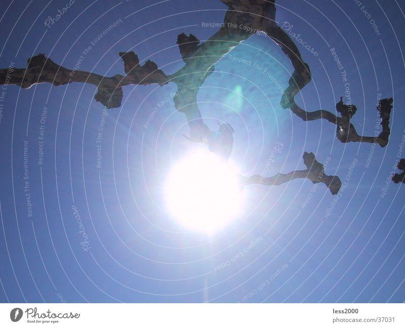solar reflection Light Sun Nature Branch Sky Blue Lens flare