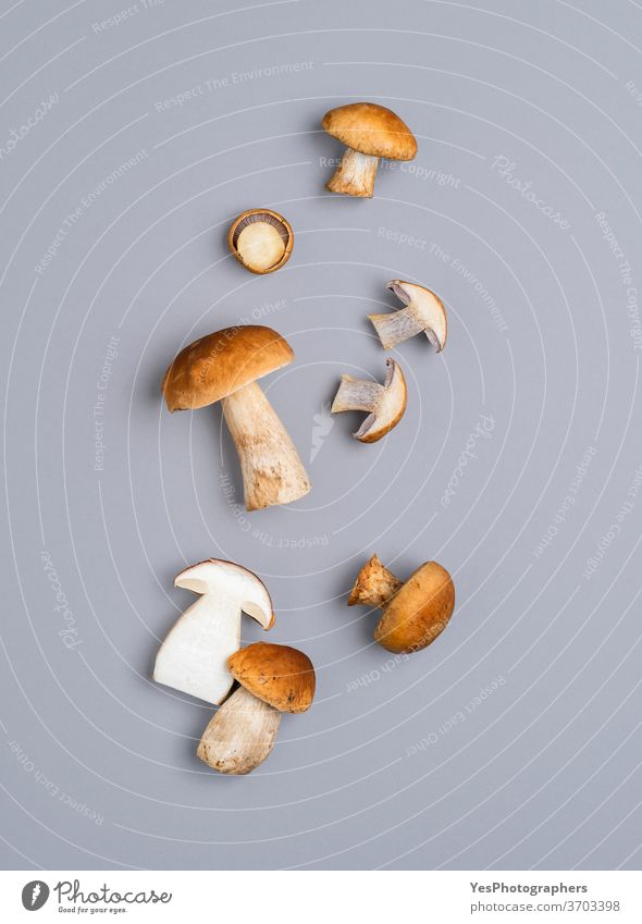 Mushrooms flat lay on a gray table. Boletus edulis mushroom isolated on a colored background above view autumn boletus brown cut out eatable edible fall food