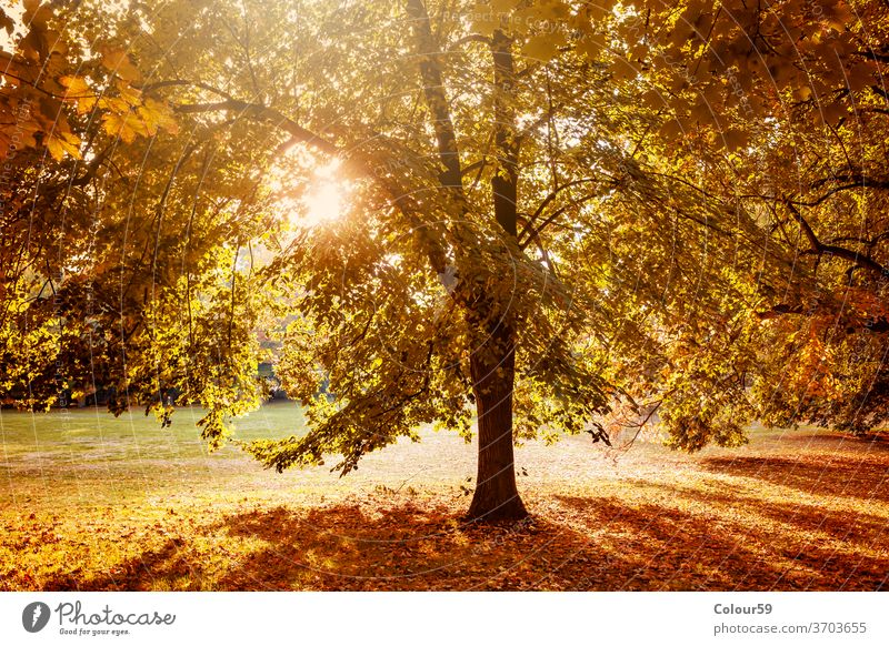 Autumn in nature park autumn fall tree yellow season landscape forest natural foliage environment light bright sun red orange leaf sunlight background sunny