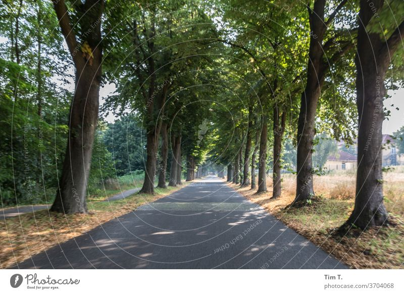 Brandenburg Avenue trees Nature Lanes & trails Street Landscape Exterior shot Deserted Colour photo Central perspective Traffic infrastructure Copy Space bottom