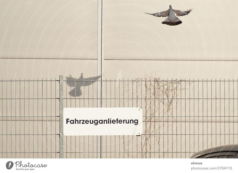 """a dove flies away, its shadow can be seen behind a fence with the sign """"Vehicle delivery"""" on a windowless facade Pigeon Shadow birds Fence Facade built Flying"""