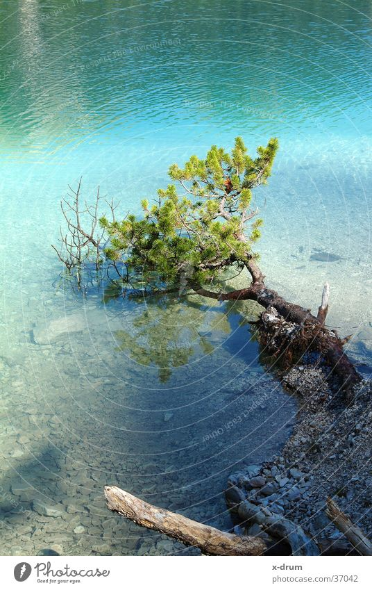 tree in the lake Lake Tree Spring Dolomites Mountain lake coniferous
