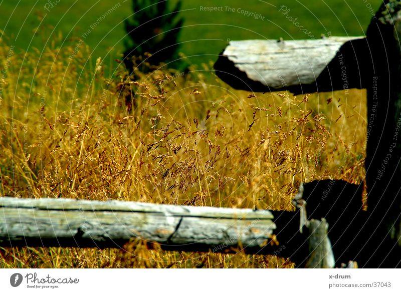 grass Grass Fence Autumn Alpine pasture Wood Mountain