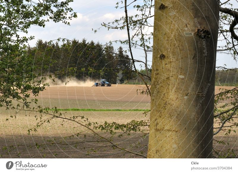 Tractor ploughs field at the edge of the forest Field Forest tree huts Agriculture Summer Dust firs beeches Tree trunk rural work ardor Loneliness green Nature