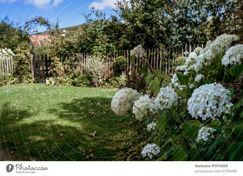 Beautiful flower garden with small wooden gate and house in the background beautiful cottage trees flower beds flowers gardening summer grass lawn colourful