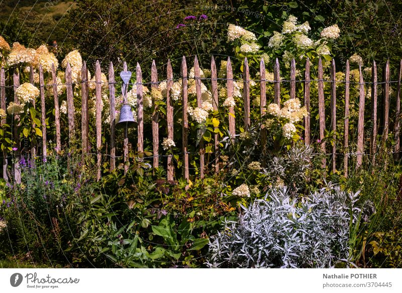 Beautiful flower garden with white hydrangeas and wooden fence beautiful flower beds flowers gardening summer colourful outside spring season plant park