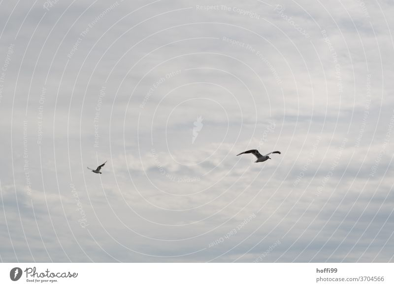 the gulls fly past one another Seagull Gull birds Flock Sky Clouds Flying Wild animal Animal Group of animals Freedom Coast Wild bird seabird Ocean Grand piano