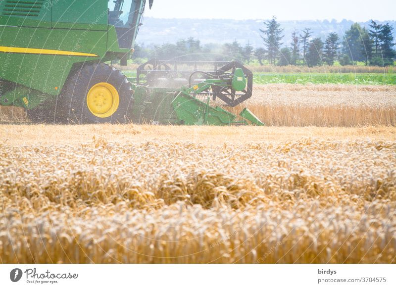Combine harvester during the grain harvest. Grain field with ripe wheat, agricultural landscape Harvest Hot harvest season work Agriculture Summer reap Dust