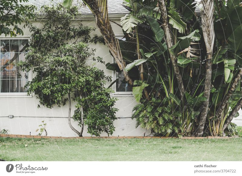 plants palms Wall (barrier) Exterior shot Deserted Plant Musaceae green Foliage plant House (Residential Structure) Window Facade tree bushes Growth Day