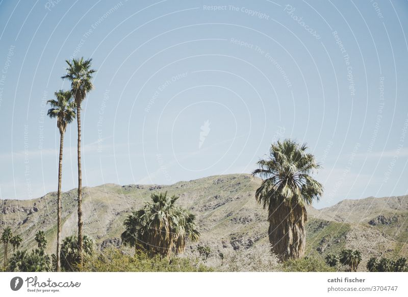 Palm Springs Palm tree mountains Hot Vacation & Travel Colour photo Exterior shot Deserted Sky Landscape Beautiful weather Nature Environment Copy Space top