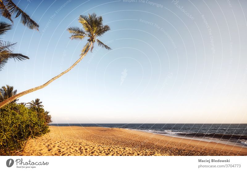 Retro toned picture of an empty tropical beach at sunset. palm summer nature retro sea relax getaway holidays vacation coconut tree sand sky no people peaceful