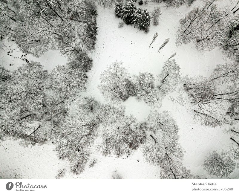 Trees from above snow covered in winter filmed by a drone background tree nature season wood pine outdoor snowy landscape weather ice frozen frost forest cold