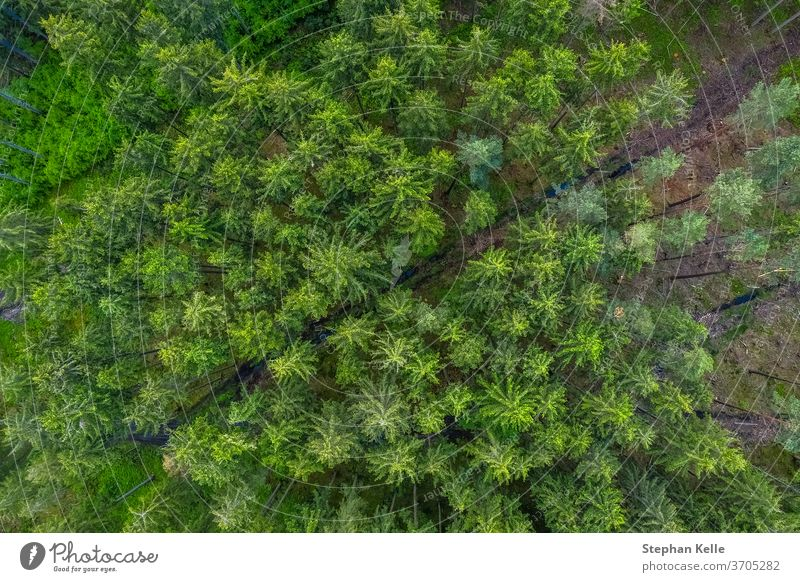 Birds eye view from the drone to a empty road through the forest with high trees. aerial background beautiful diagonal green nature path flight landscape lane