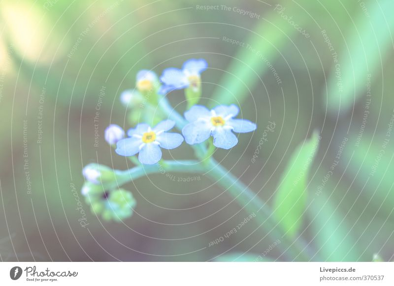 Nature Blue Green Beautiful Summer Plant Flower Leaf Environment Meadow Grass Small Blossom Natural Field Authentic