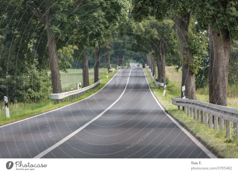in the passenger seat through Brandenburg Avenue Street Lanes & trails Exterior shot Country road Day Traffic infrastructure Deserted Colour photo Landscape