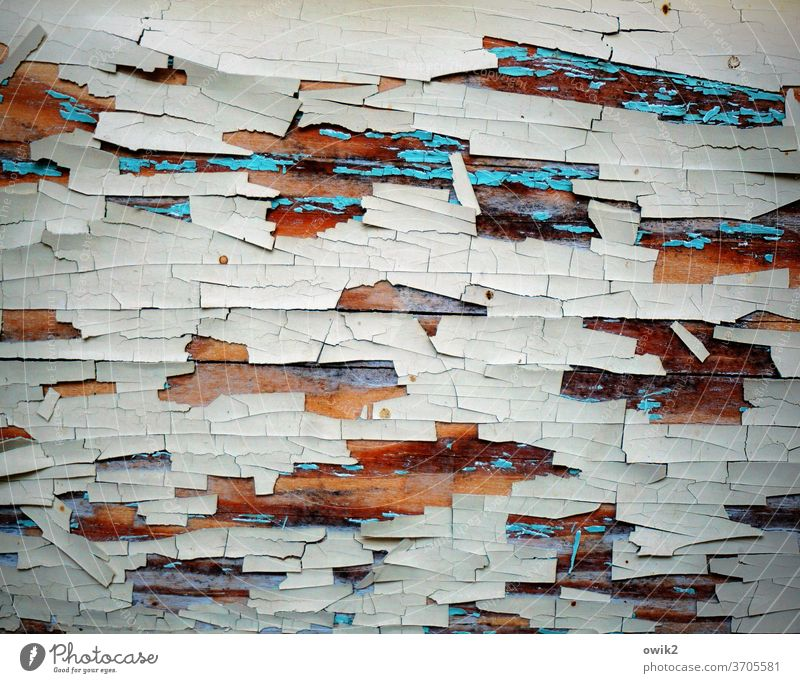 Little by little wood Old Pattern Exterior shot Structures and shapes Deserted Close-up Abstract White Flake off Derelict Colour photo Detail Ravages of time