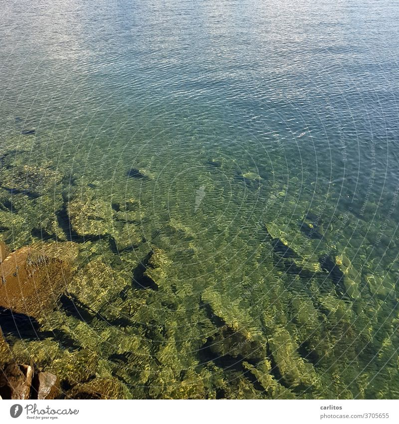 The lake bottom of the Bodensee Lake Lake Constance Water stones sound reflection green turquoise Blue Reflection Waves Nature Summer Lakeside Beautiful weather