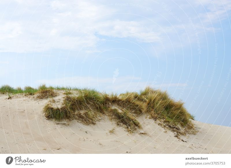 marram grass on sand dune dunes beach seaside baltic germany coastal sandy landscape nature background foreshore vacation hill mecklenburg ocean sky summer