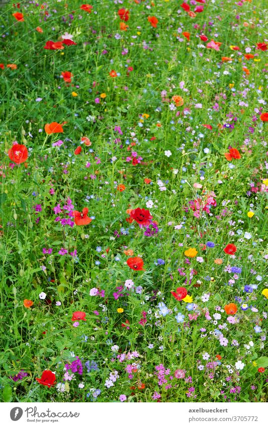 wildflower meadow in bloom field colorful multicolored blossom mixed summer nature blooming garden floral landscape growth various vibrant vivid uncultivated