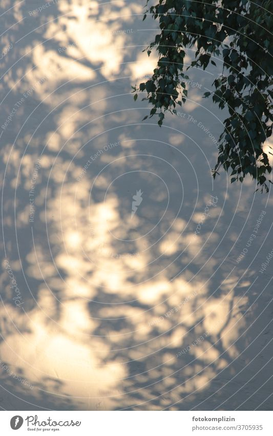 Shadow play of a birch tree on a white house wall Dark side Silhouette Shadowy existence Light Birch tree Visual spectacle Shaft of light Flare