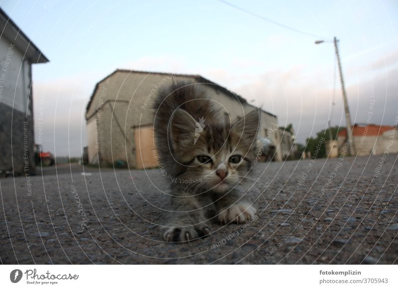 little kitten stretches and stretches in the early morning on a village street Kitten Cat cats feline Stretching elongate morning gymnastics Yoga Yoga posture