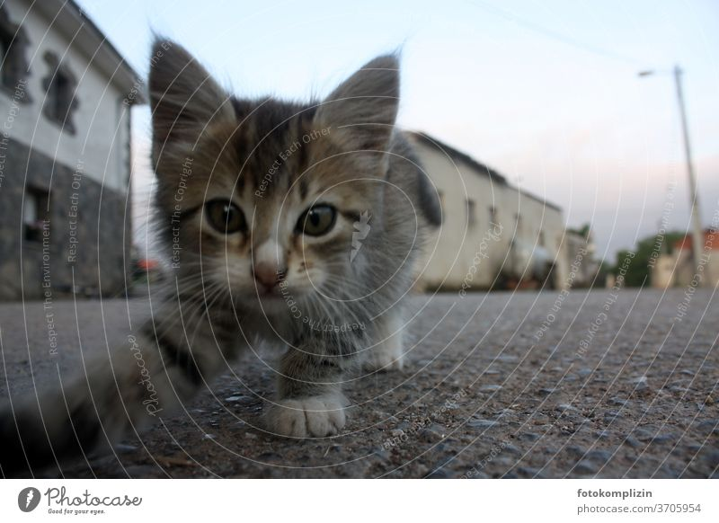 Good morning - curious little kitten looking at camera on a spanish village street Cat Small inquisitorial Animal portrait Pet Cat eyes feline Cat's head Cute