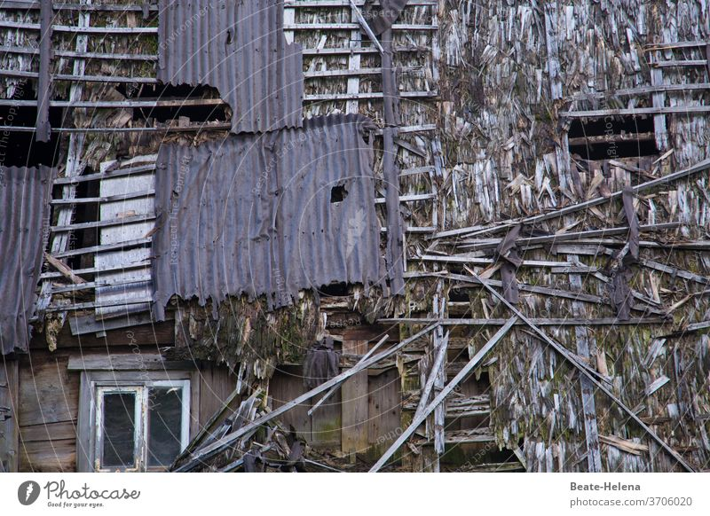 Once upon a time: ramshackle wooden farmhouse Black Forest house Farm Broken dilapidated Wooden house Exterior shot House (Residential Structure) Building