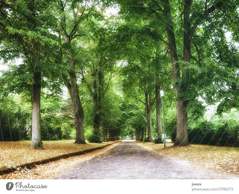 Empty tree alley with cobblestone street huts leaves off Street Target Lantern daylight Idyll Cobblestones Deserted Lonely Yellow Tall Old Central perspective